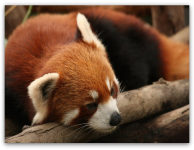 Mozilla отказывается от metro-версии Firefox. Демонстрация Unreal Engine 4 в…