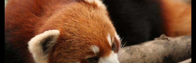 Mozilla отказывается от metro-версии Firefox. Демонстрация Unreal Engine 4 в браузере