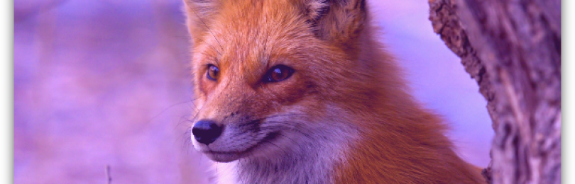 Первый планшет с Firefox OS будет стоить всего 80 евро